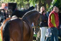 Paardenmarkt ameide