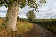 Zuid Limburgs landschap